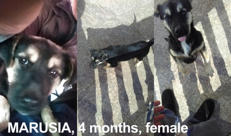 Marusia 4 months female.jpg