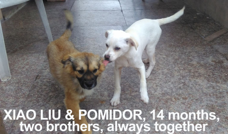 Xiao Liu and Pomidor 14 months